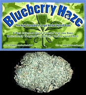 Blueberry Haze Hyro Bud.